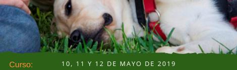 [:ca]Curs Terapia Asistida con Animales[:es]Curso Terapia Asistida con Animales[:]